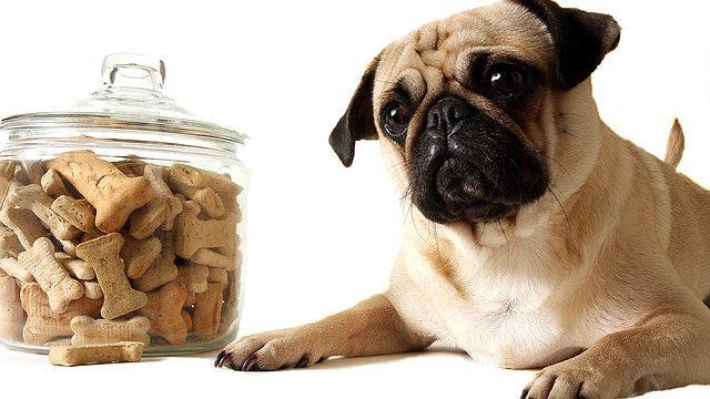 Аллергии у собак и методы решения