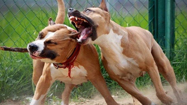 Укусы других собак – быстрая помощь